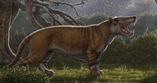 carnivorous-mammal-larger-than-polar-bear-once-roamed-kenya