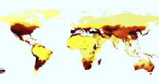 scientists-map-distribution-of-bee-species-worldwide