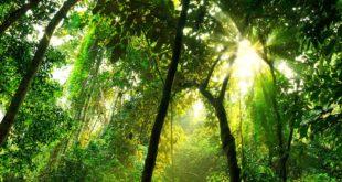 Amazon' Rainforest