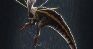 cretaceous-dinosaur-had-impressive-mane-and-shoulder-ribbons