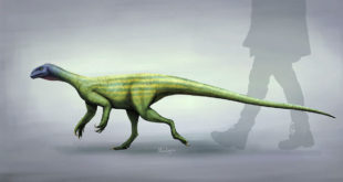 paleontologists-reconstruct-neuroanatomy-of-triassic-omnivorous-dinosaur