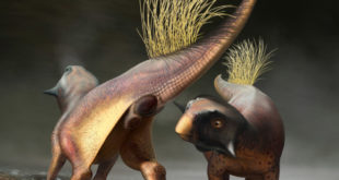 paleontologists-reconstruct-cloacal-opening-of-non-avian-dinosaur