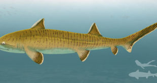 well-preserved-fossil-of-jurassic-period-shark-unearthed-in-germany