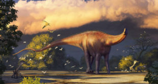 new-sauropod-dinosaur-discovered-in-uzbekistan
