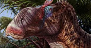 , Duck Billed Dinosaur, #Bizwhiznetwork.com Innovation ΛI