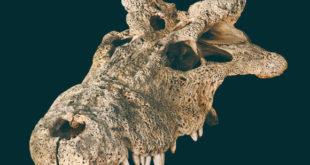 , Extinct 'Horned' Crocodile, #Bizwhiznetwork.com Innovation ΛI