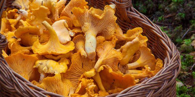 , Mushroom Consumption, #Bizwhiznetwork.com Innovation ΛI
