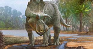 Dinosaur, Ceratopsid Dinosaur, #Bizwhiznetwork.com Innovation ΛI