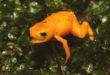 , Fluorescent Frog, #Bizwhiznetwork.com Innovation ΛI