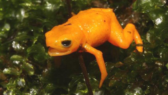 , Fluorescent Frog, #Bizwhiznetwork.com Innovation ΛI