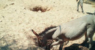 , Feral Horses & Donkeys, #Bizwhiznetwork.com Innovation ΛI