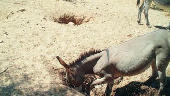 , Feral Horses & Donkeys, #Bizwhiznetwork.com Innovation ΛI