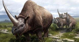 , Rhinoceros Family, #Bizwhiznetwork.com Innovation ΛI