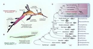 , Seadragon and Pipefish, #Bizwhiznetwork.com Innovation ΛI
