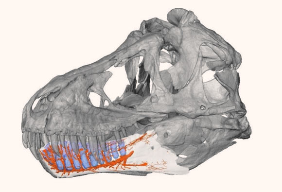 , Tyrannosaurus Rex's Jaw, #Bizwhiznetwork.com Innovation ΛI