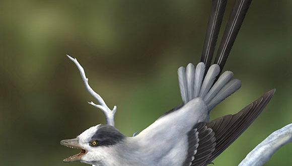 , New Bird Species, #Bizwhiznetwork.com Innovation ΛI