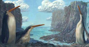 , New Giant Penguin, #Bizwhiznetwork.com Innovation ΛI
