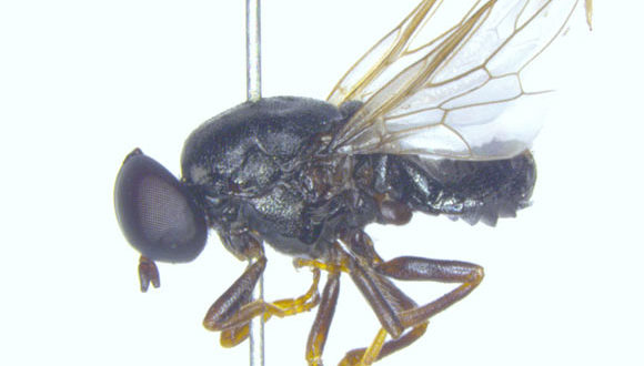 , Window Fly Discovered, #Bizwhiznetwork.com Innovation ΛI
