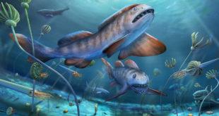, Permian Period Shark, #Bizwhiznetwork.com Innovation ΛI