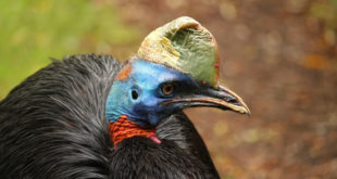 , Prehistoric New Guineans, #Bizwhiznetwork.com Innovation ΛI