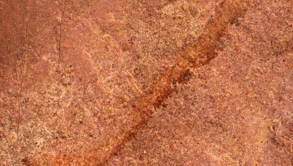 , Rare Cambrian Worm, #Bizwhiznetwork.com Innovation ΛI