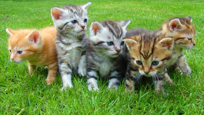 Cats, Personality Traits in Cats, #Bizwhiznetwork.com Innovation ΛI