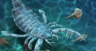 , Giant Sea Scorpion, #Bizwhiznetwork.com Innovation ΛI