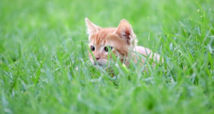 , Cats Hunt Wild Prey, #Bizwhiznetwork.com Innovation ΛI