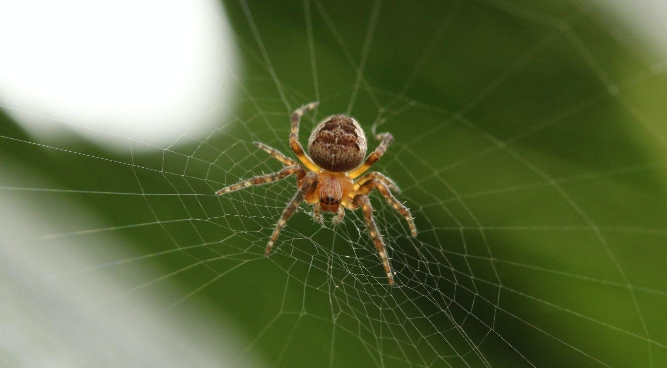 , Spider Silk Myth, #Bizwhiznetwork.com Innovation ΛI